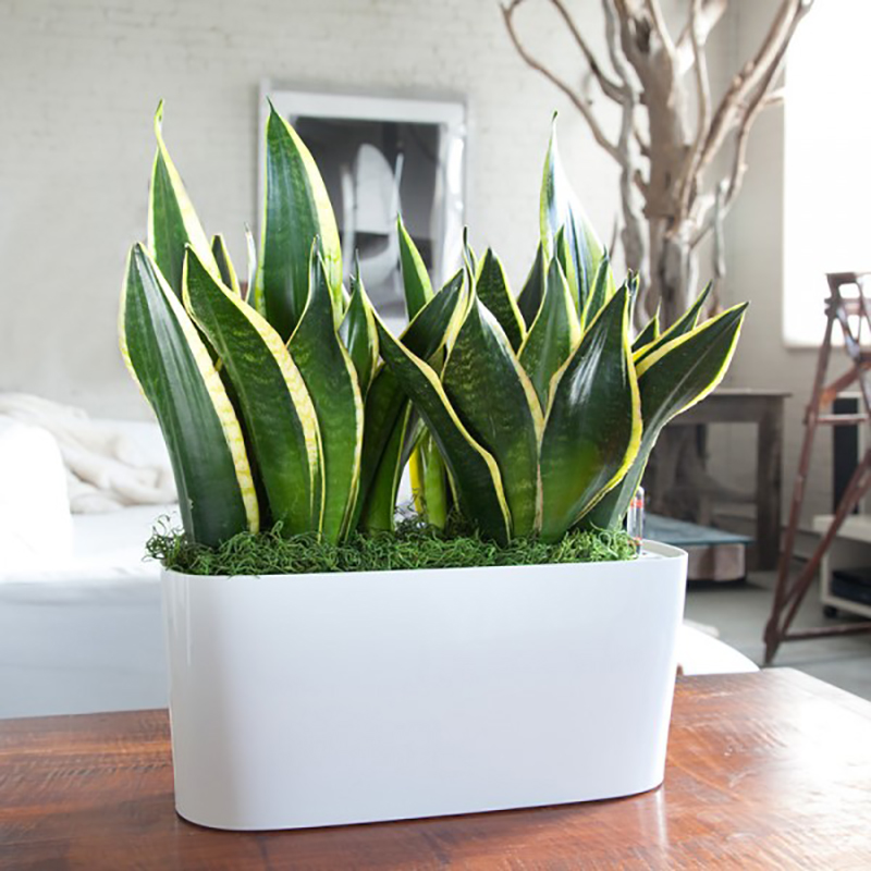 5 Ways to Raise Your Design Vibe: Add Plants