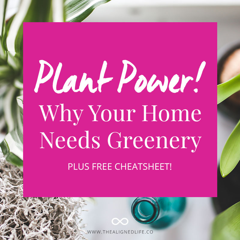 Plant Power! Why Your Home Needs Greenery - Plus Free Cheatsheet! - The Aligned Life
